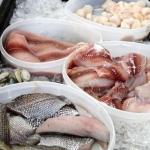Pura Vida Fisheries